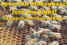 Bees & Beekeeping / Leaders in the beekeeping world, information about bees, systemic pesticides, bee diseases and how to info.