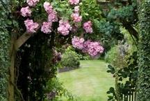 Garden / by Bian Ca