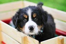 I love dogs! <3 / by Stefania Foti