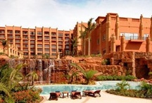 Hotels in Africa / Hotels and Destinations in Africa - Lions and Tigers and Bears, Oh My!