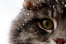 Cats / #Cats