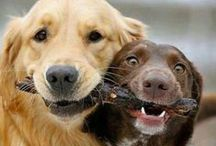 Dogs / Adorable dog pictures. All of the other animals are on my Animal Love board.