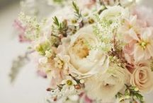 Wedding Flowers / by Susan Barrows