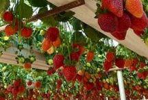 home : edible garden