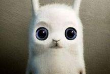 weird bunnies