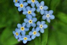Flowers / by Morgan Kelsey