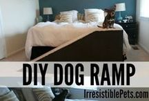 Homes: Pet Friendly / Home design features with your dog, cat or pet in mind.
