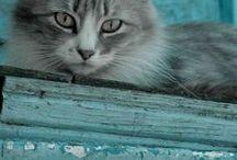 Chats à la fenêtre ❤️ℒℴvℯ❤️ & autres