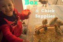 Backyard Chickens / Information, tips and products to help keep happy and healthy backyard chickens.