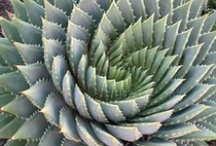 Fractal Cosmos / A collection of fractions of nature and science that are the very soul of a larger detail.