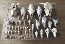 Cabinet of Curiosities. / In which I gather together other peoples collections that I covet.