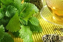 Herbs, Remedies & Medical Info / by Belliacres Homestead