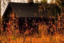 colors of the seasons  / by Phyllis Elliott
