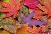 Colour! / It's all about colour!