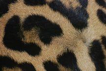 Leopard / Imagen T. O/I 13/14 / by Iria Botana