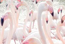 Flamingo / Imagen T. P/V 14 / by Iria Botana