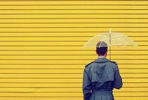 Yellow / Imagen / by Iria Botana