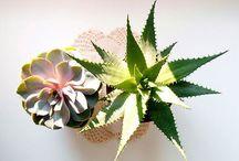 Cactus / Plants T. P/V 14 / by Iria Botana