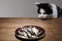 Pets / by Iria Botana