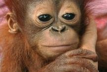 Don't Be Cruel! / ...Say NO to...  Animal Testing...Animals in captivity for entertainment...Palm Oil... / by Julie Mack
