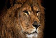 Animal Kingdom / by Carol White
