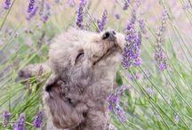 Lavender Love / by Carol White