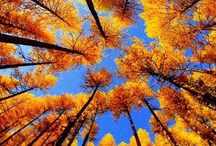 Colorful days from Autumn... / Autumn nature photography