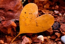 Hearts in Nature / by Carmen .