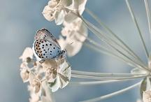 Butterflies and Moths / by Carmen .