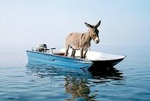 Boats / by Carmen .