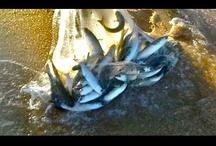 Insane Fishing Videos / by MulletRun Fishing