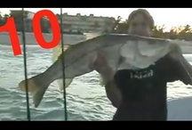 Snook Fishing Videos / Snook fishing videos from Florida. Select Captain Jeff YouTube Video Playlist.  / by MulletRun Fishing