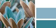 Decorating {Color Combos}