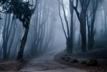 Melancholy - Moody Atmosphere / Melancholy is as seductive as Ecstasy. (Mason Cooley)  / by Ella Ella