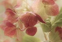 Flora / by Cheryl Gorske