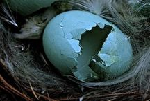 Nests, Eggs and Feathers / by Carmen .