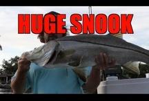 10 Second Fishing Show (Season 2) / by MulletRun Fishing