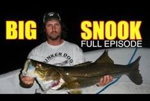 Captain Jeff FIshing Shows (Full Episodes) / The Best Snook and Tarpon show Online. Captain Jeff aka the Lunkerdog fishes with live bait the inshore waters of south Florida catching big sportfish. No sponsors. Just big fish.  / by MulletRun Fishing