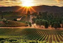 Vineyards / by C G