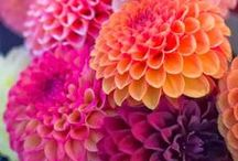 Flowers / by Ashley Christine