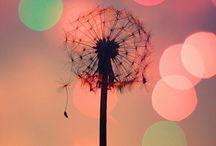 Inspiration ✨ / Photos and nice words ☀️