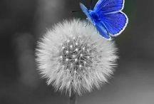 Dandelions  / Lovely