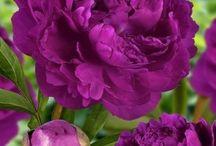 Blooms / Flowers / by Susan Ellis