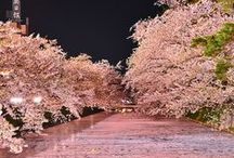 Art Inspiration - Sakura (Cherry) Blossoms & Trees