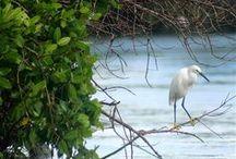Birds I've Seen  / by Jenni Brummett