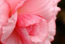 Pink Art / by Jenni Brummett
