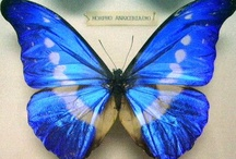butterfly / by Maria Varni