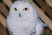 Owls & hooty stuff... / by Pamela Leffler