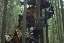 Treehouses / All about #treehouses or adults and #kids! / by PureBond Hardwood Plywood
