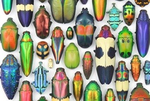 insects / by Maria Varni